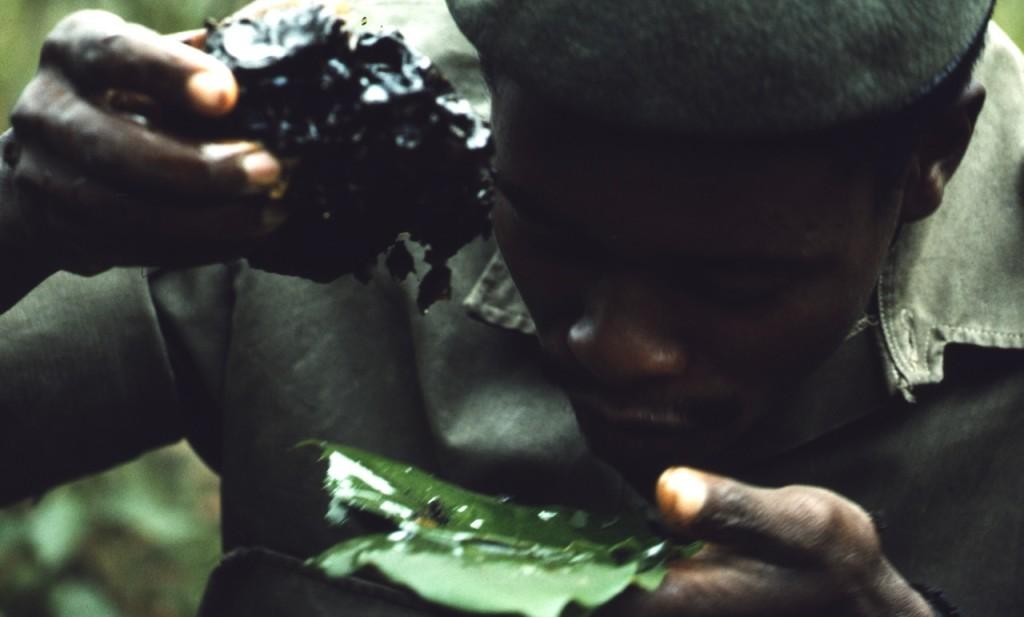 Vandring med pygméer - han har hittat honung, inget kunde vara godare!; Zaire