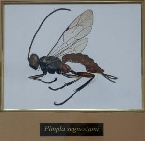 Utm Pimpla (800x776)